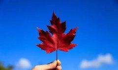 没钱也没权,普通人的加拿大移民生活怎么过?